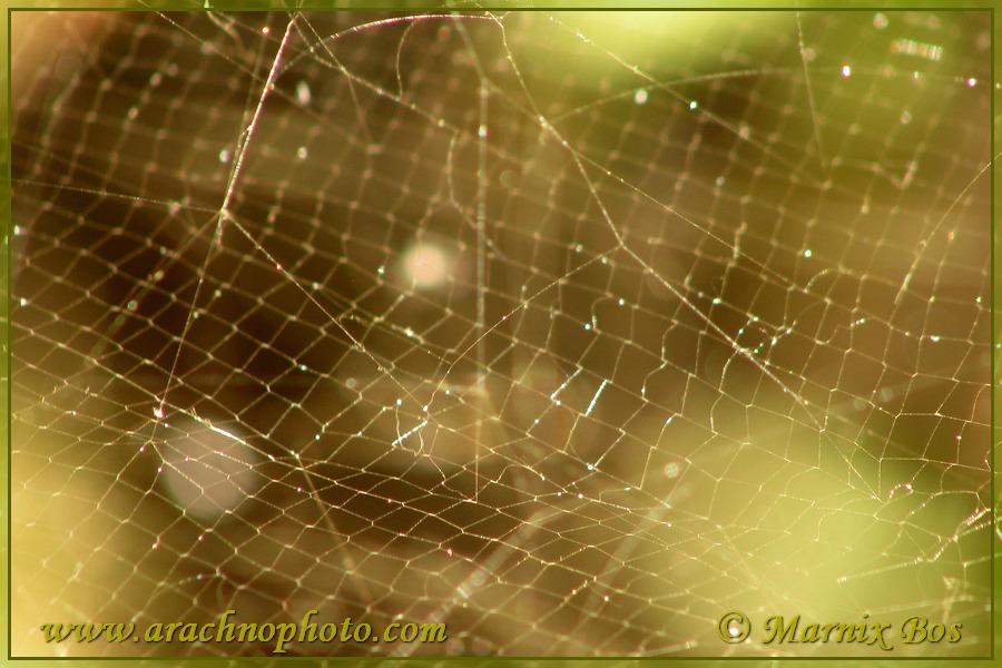 Fishing net web