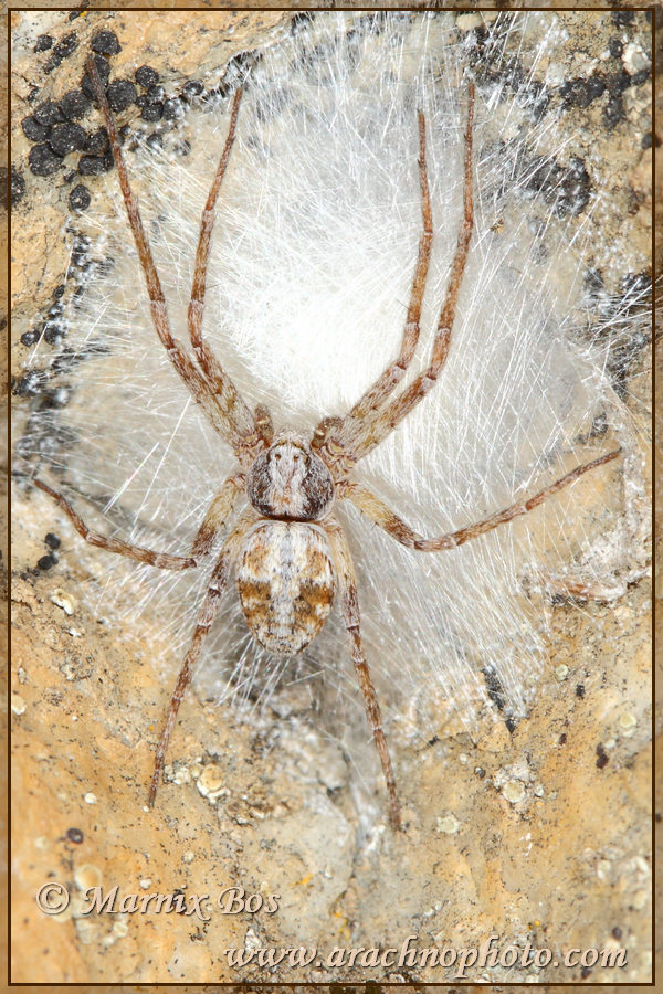 Female with egg sac