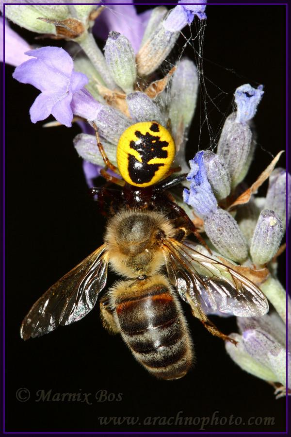 Female with honeybee
