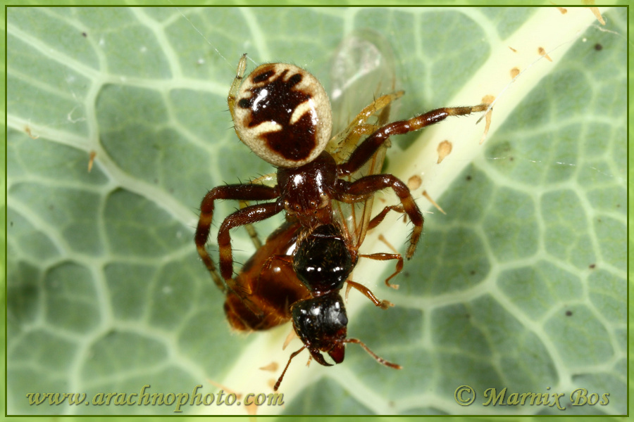 Female with ant