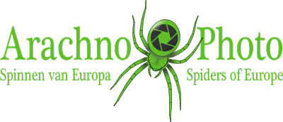 Logo of www.arachnophoto.com